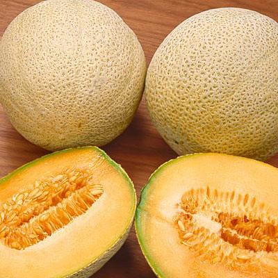 Hale's best Melon (เมล่อน เฮลเบส)