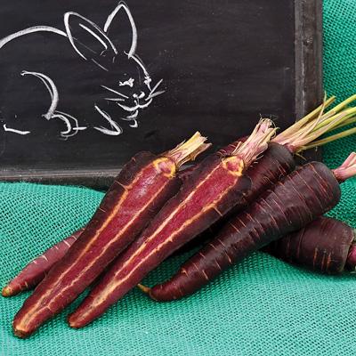 Purple Sun Carrots (แครอทสีม่วง)