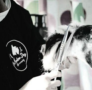 อาบน้ำตัดขนสุนัข Modern Dog Grooming and Farm Onnut 46