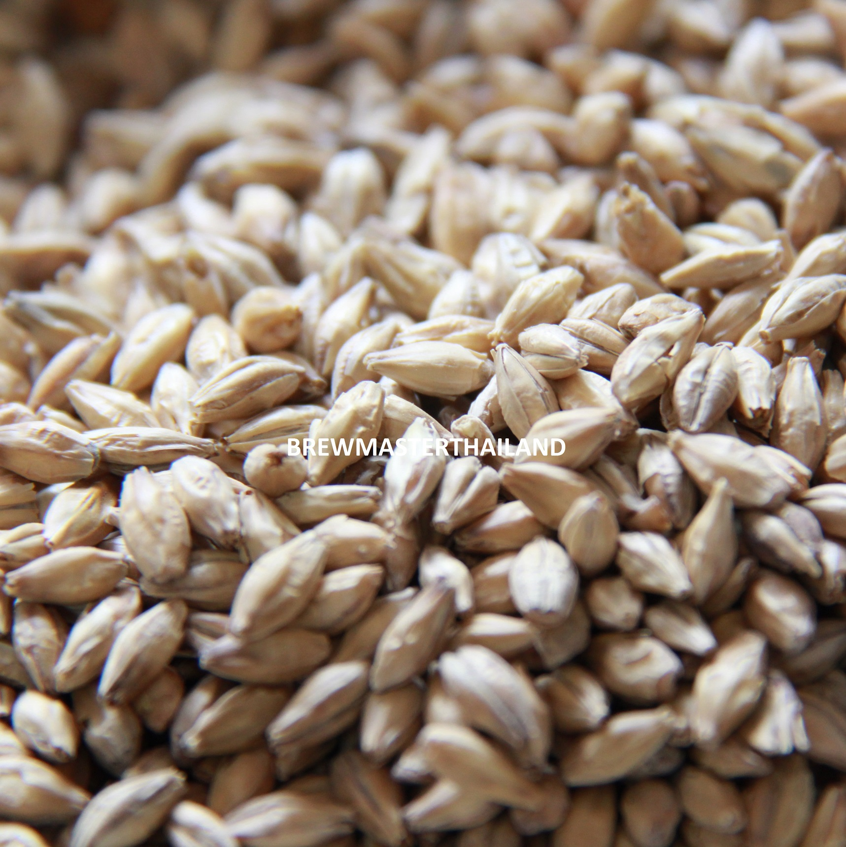 Munich Malt Type 2 - Weyermann (2 lbs)