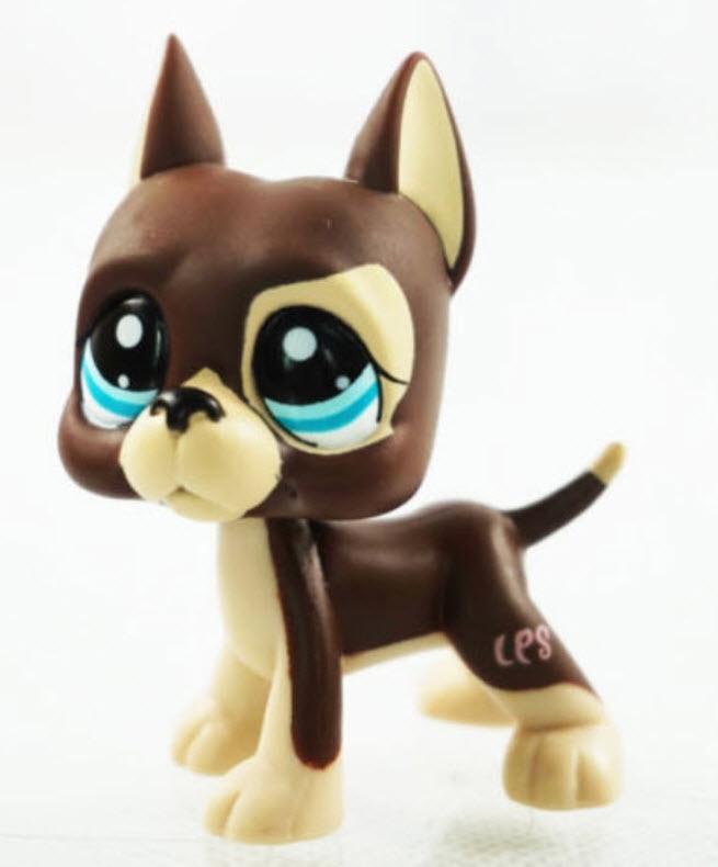 สุนัขเกรทเดน สีน้ำตาลตาสีฟ้า #1519