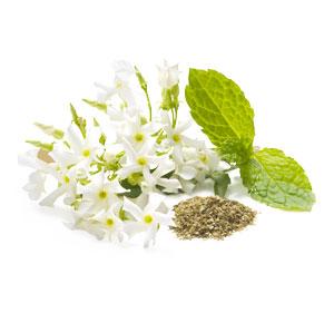 White Jasmine Mint fragrance 1 kg.